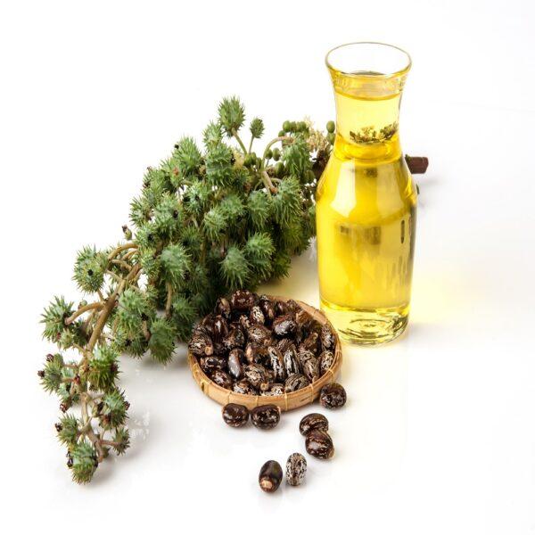 Riitsinusõli ehk kastooriõli 100 ml- 1L